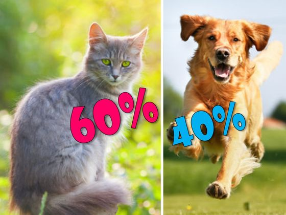 Is Your Personality More Like A Cat Or A Dog?