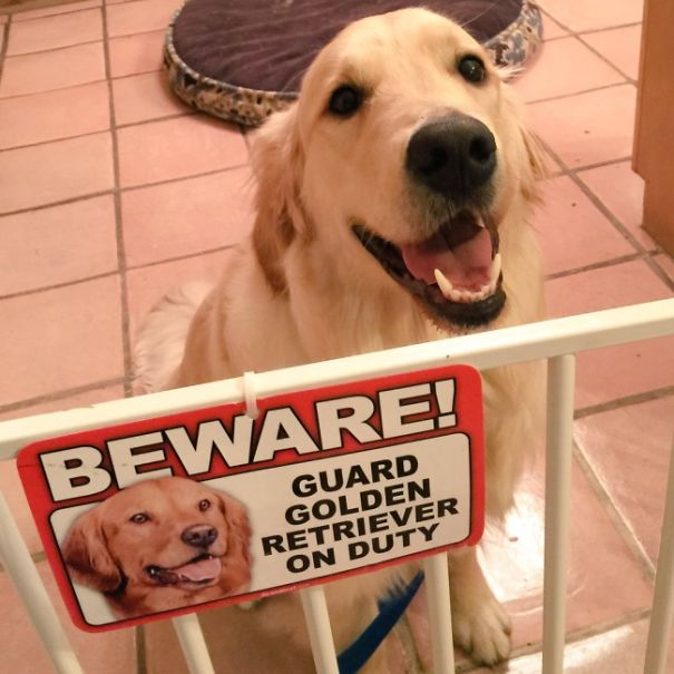 Beware Of Dog! Calvin May Lick You To Death!