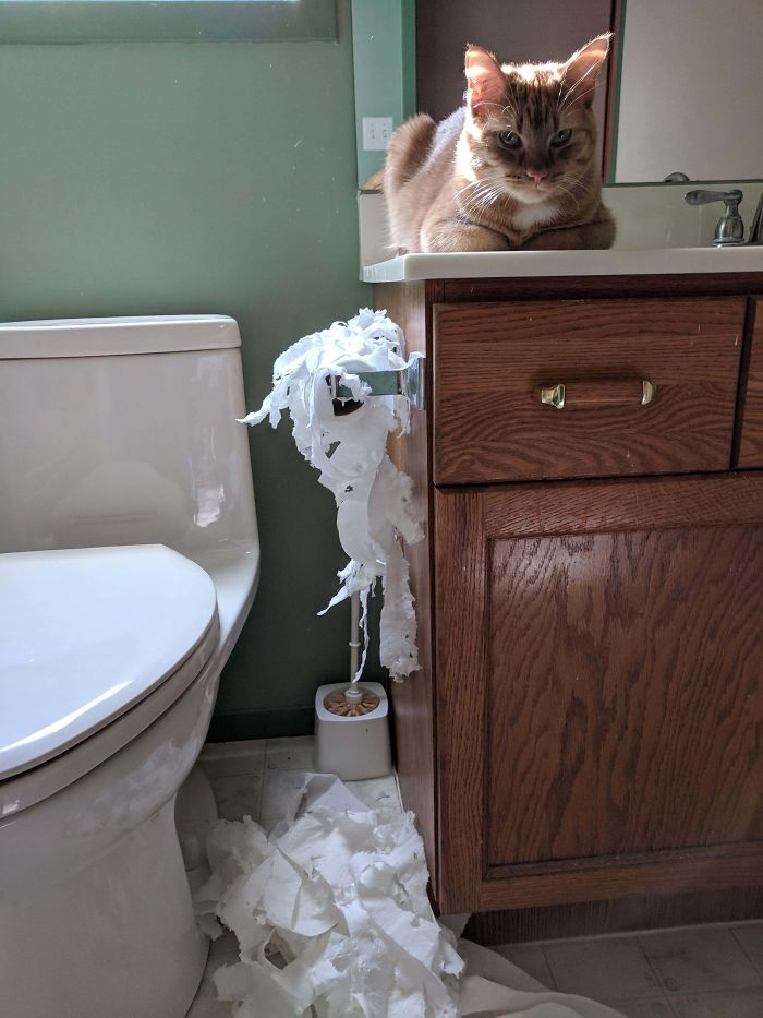 Locked My Cat In The Bathroom While I Made A Meal Because He Was Being Annoying. Revenge Was Had
