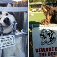Beware of the Dog - Cute