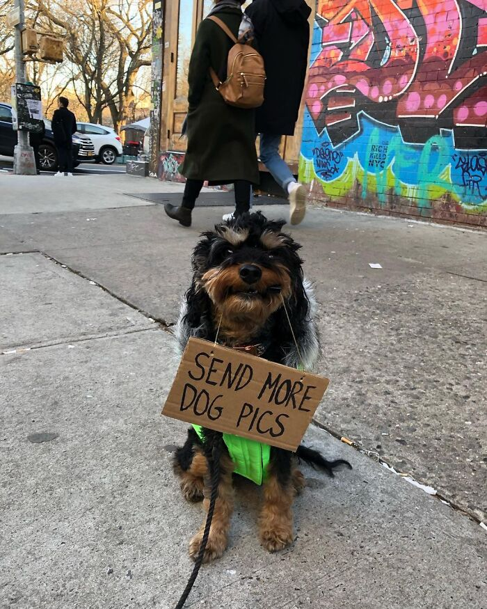 Dog With Sign
